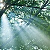 木漏れ陽と光