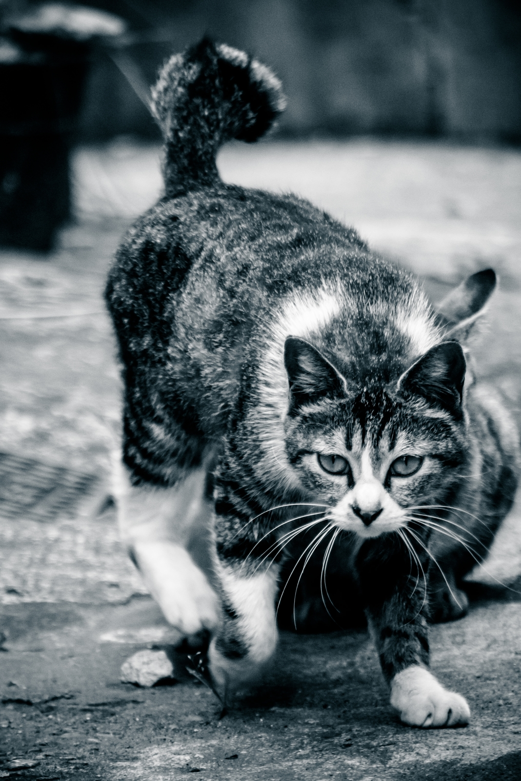 軽い身のこなし猫軽い身のこなし猫