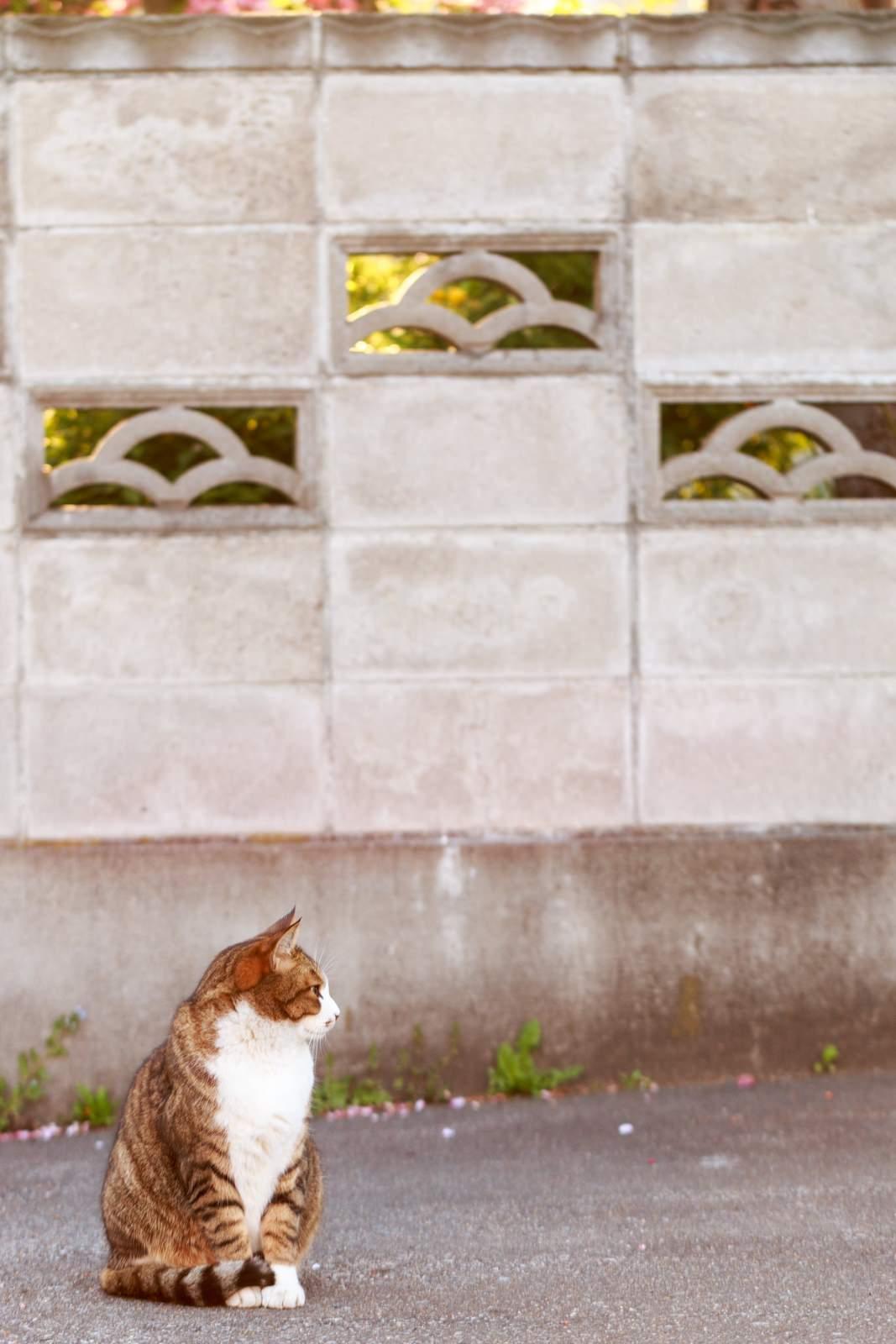昼下がりの猫昼下がりの猫