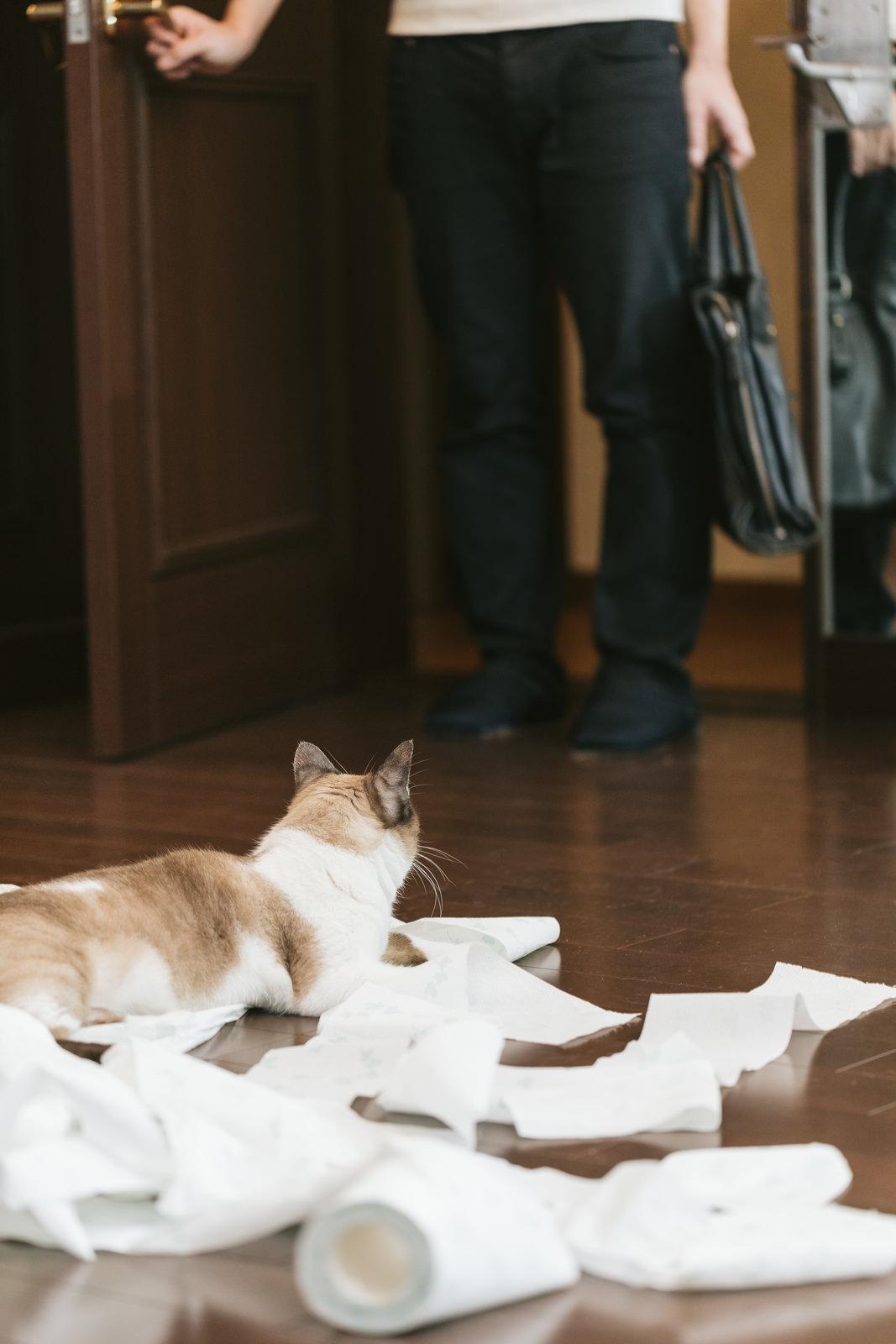 帰宅したら猫がティッシュでいたずらしていた帰宅したら猫がティッシュでいたずらしていた