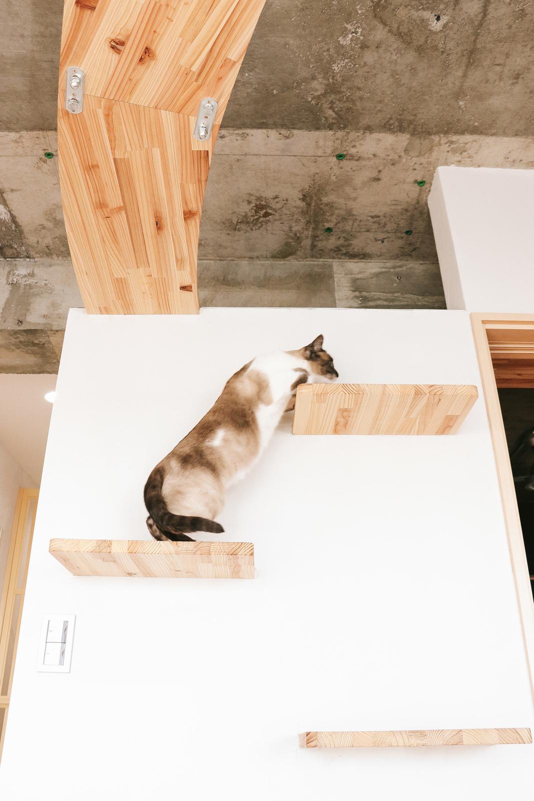 キャットステップを登る猫キャットステップを登る猫