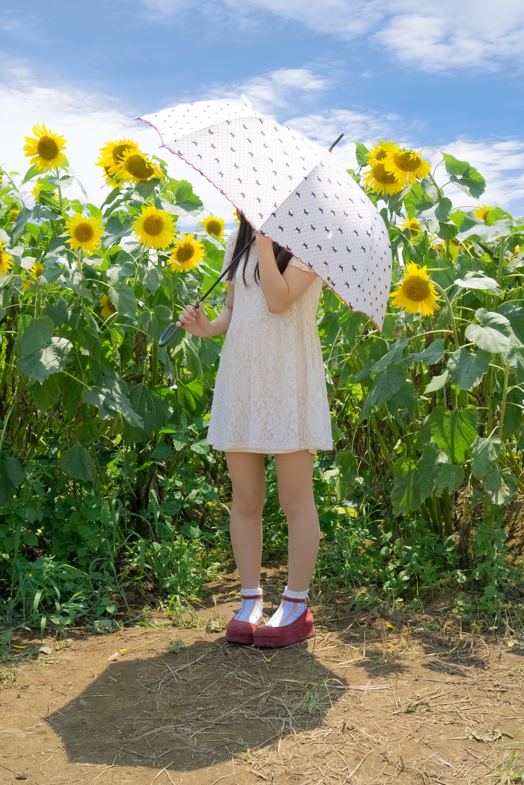 ひまわり畑と日傘少女のフリー素材