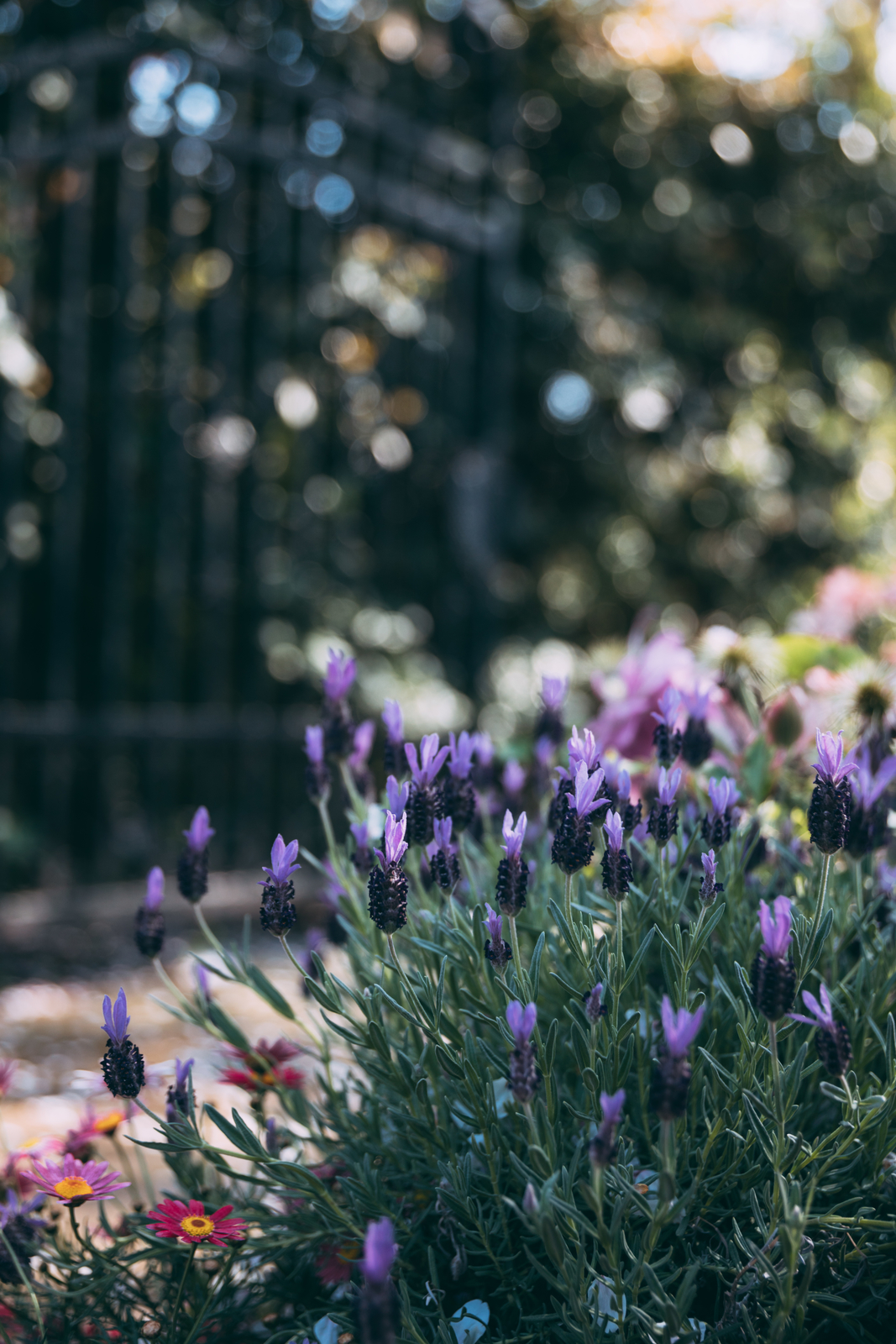 エイボンヴューの花壇のフリー素材