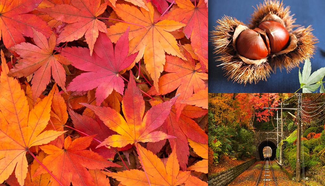 秋の季節と言えば、読書の秋、食欲の秋、紅葉する木々の景観