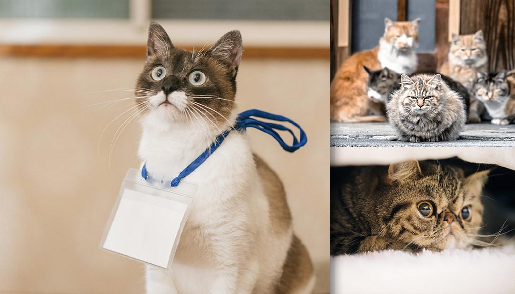 猫好きよあつまれ! 心癒される猫ちゃんの様子