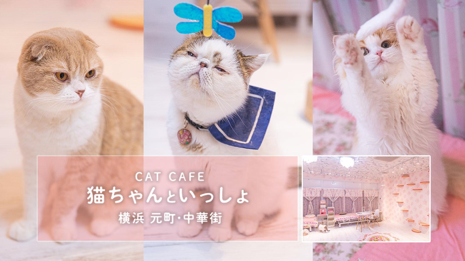 映える猫カフェ「猫ちゃんといっしょ」に行ってきました