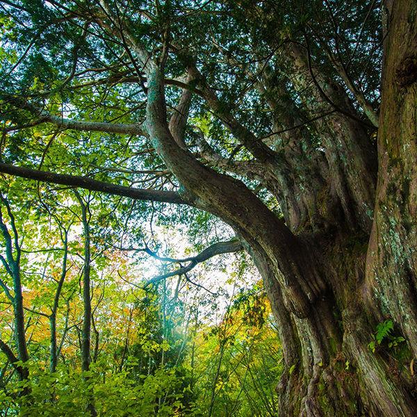 自然風景の写真カテゴリ無料の写真素材はフリー素材のぱくたそ