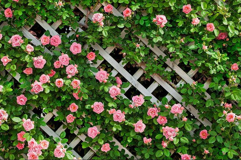 花のフリー写真素材