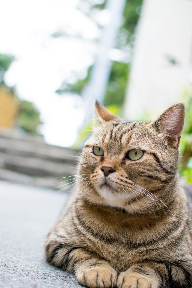 「ボス風格の野良猫」の写真