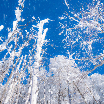 八ヶ岳ブルーに舞い上がる霧氷の雪の写真