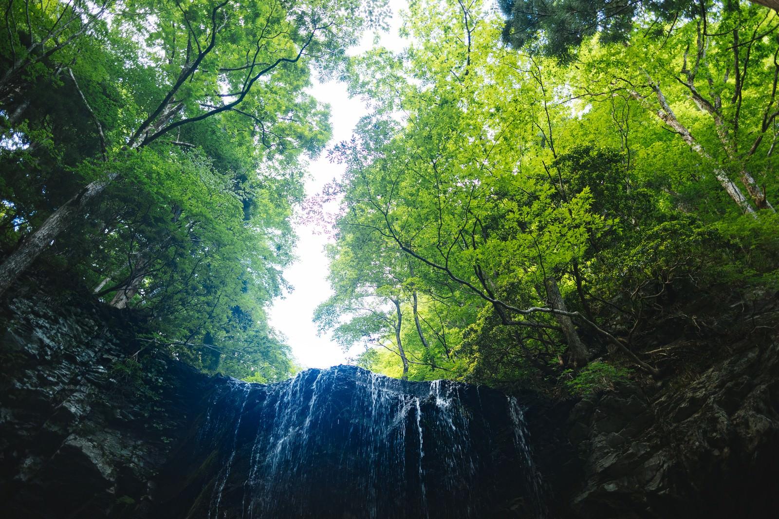 「新緑に包まれる岩井滝新緑に包まれる岩井滝」のフリー写真素材を拡大