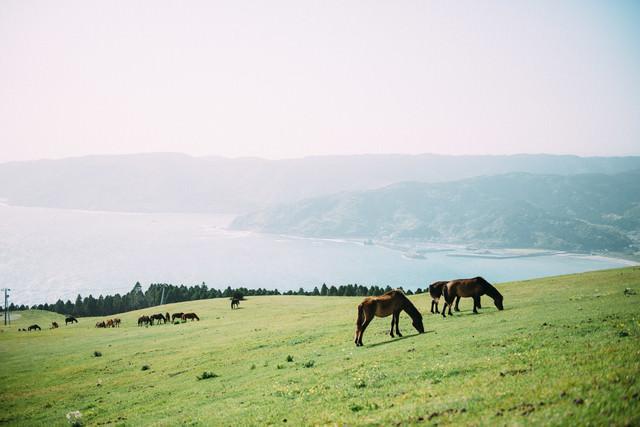 宮崎県の都井岬と馬の写真