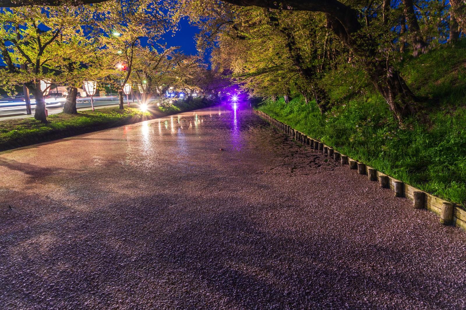 「夜桜(ライトアップ)の花筏 | 写真の無料素材・フリー素材 - ぱくたそ」の写真