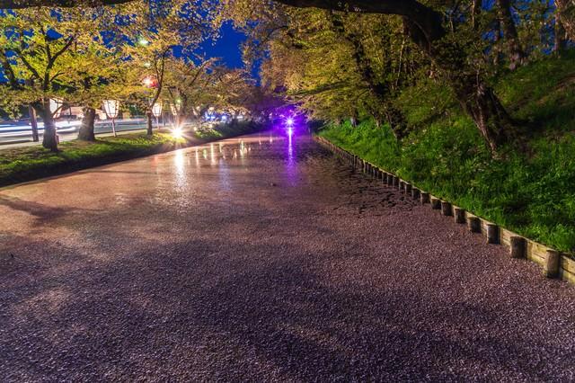 夜桜(ライトアップ)の花筏の写真