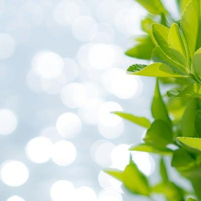 春緑の写真