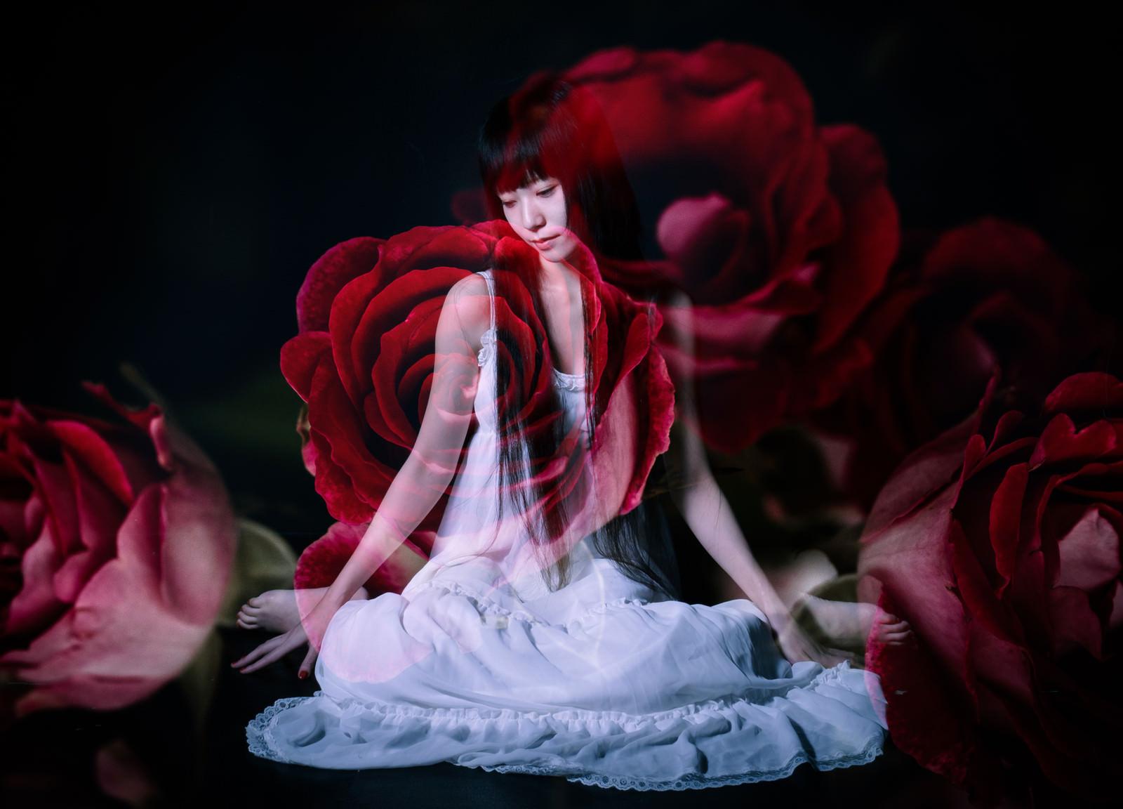 「薔薇と女性(フォトモンタージュ)」の写真[モデル:緋真煉]