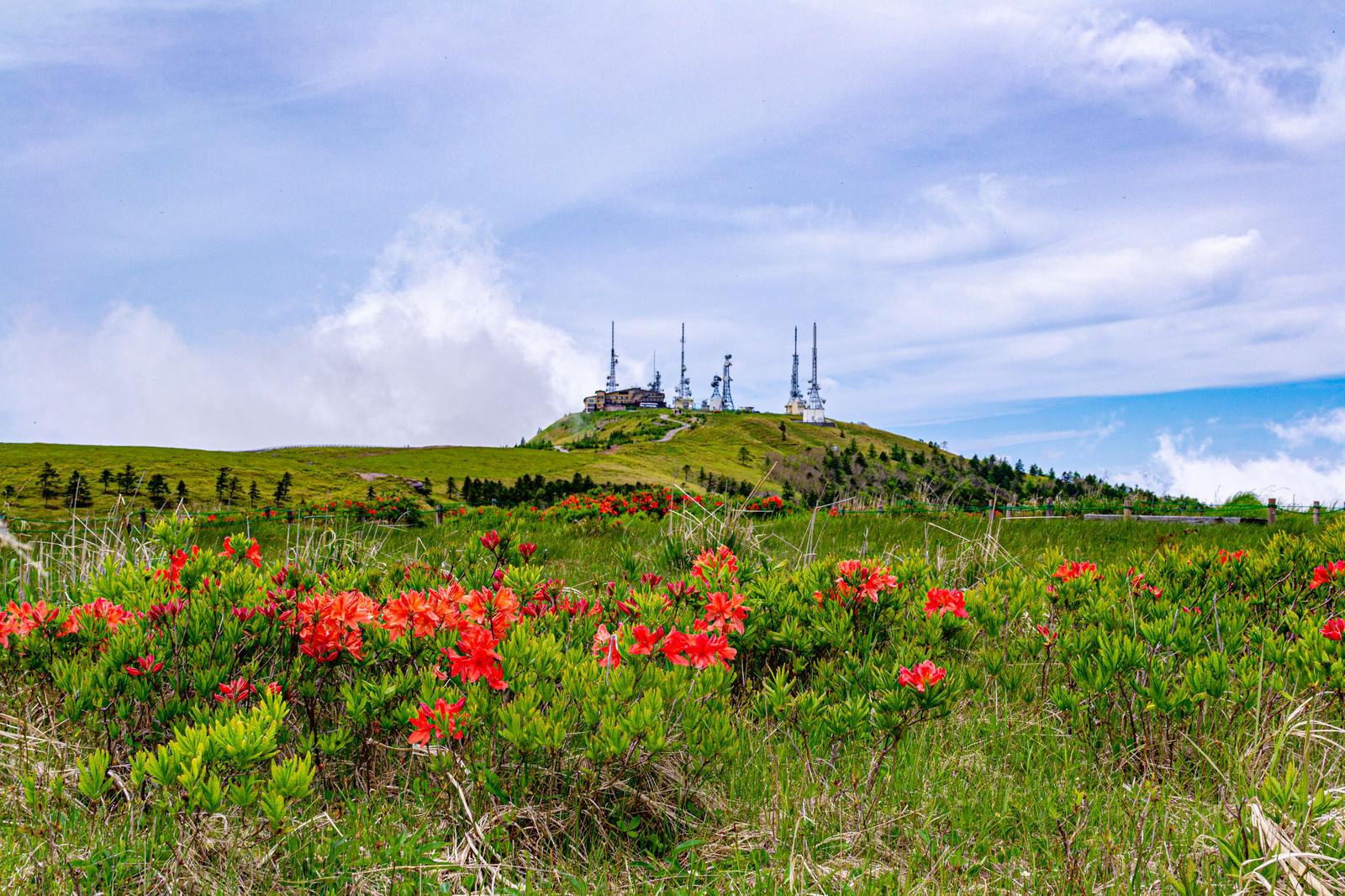 「高山植物と電波塔(美ヶ原)」の写真