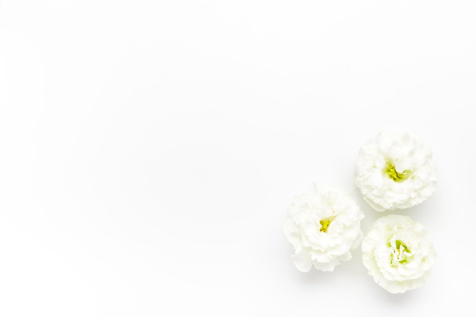 「白いトルコギキョウ」の写真