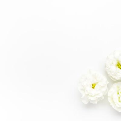 「白いトルコギキョウ」の写真素材