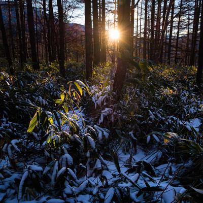 哀愁漂う冬山の夕暮れの写真