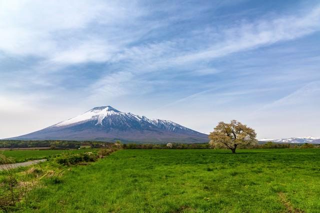 岩手山と一本桜の写真