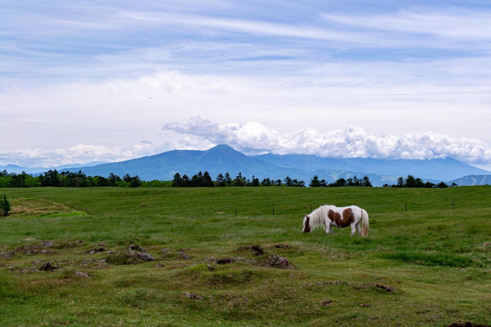 「美ヶ原高原と馬」の写真