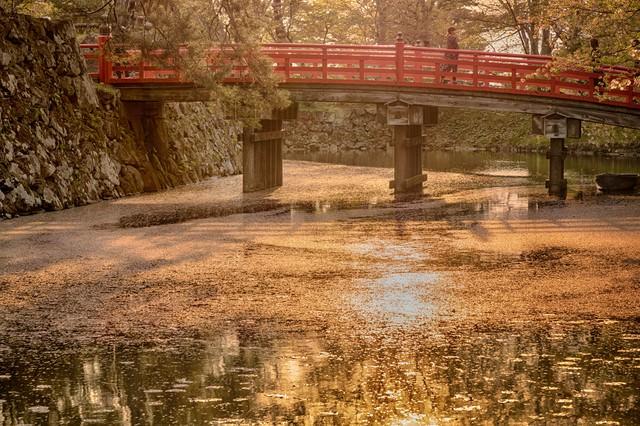 弘前公園(ひろさきこうえん)のお堀と桜花の写真