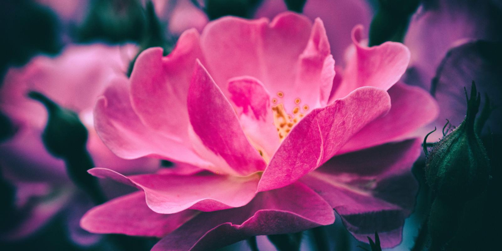 「開花する妖麗の花」の写真