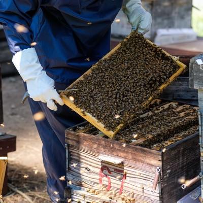 ミツバチの巣箱の中をチェックの写真