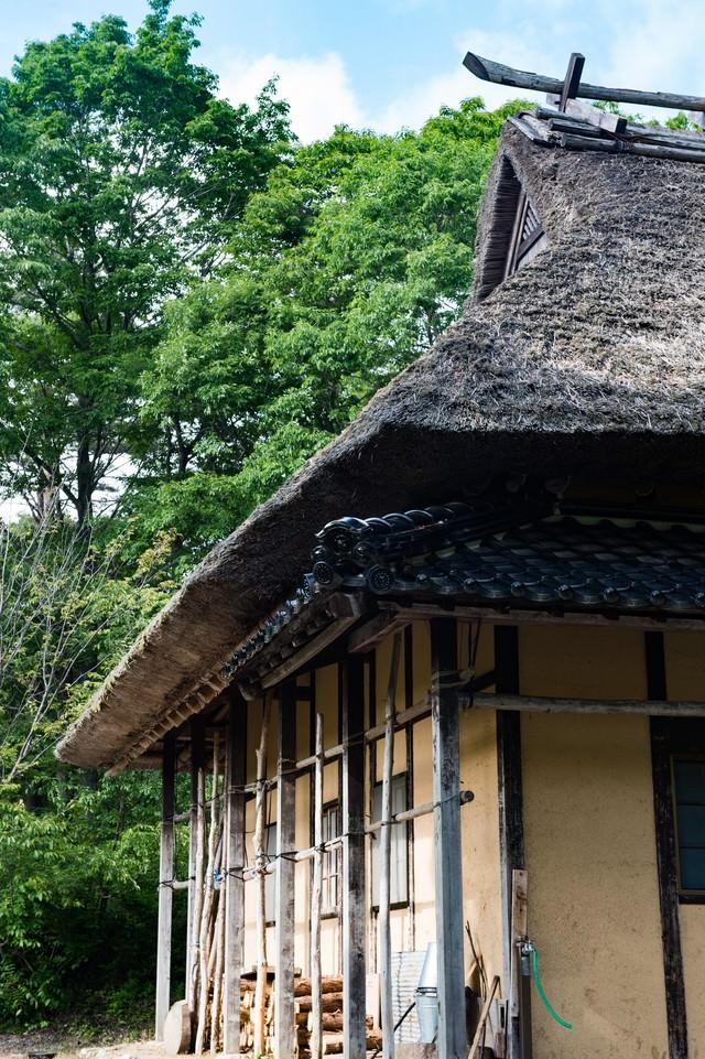 茅葺屋根と新緑の写真