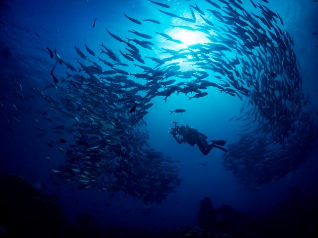 ギンガメアジに囲まれるダイバーの写真