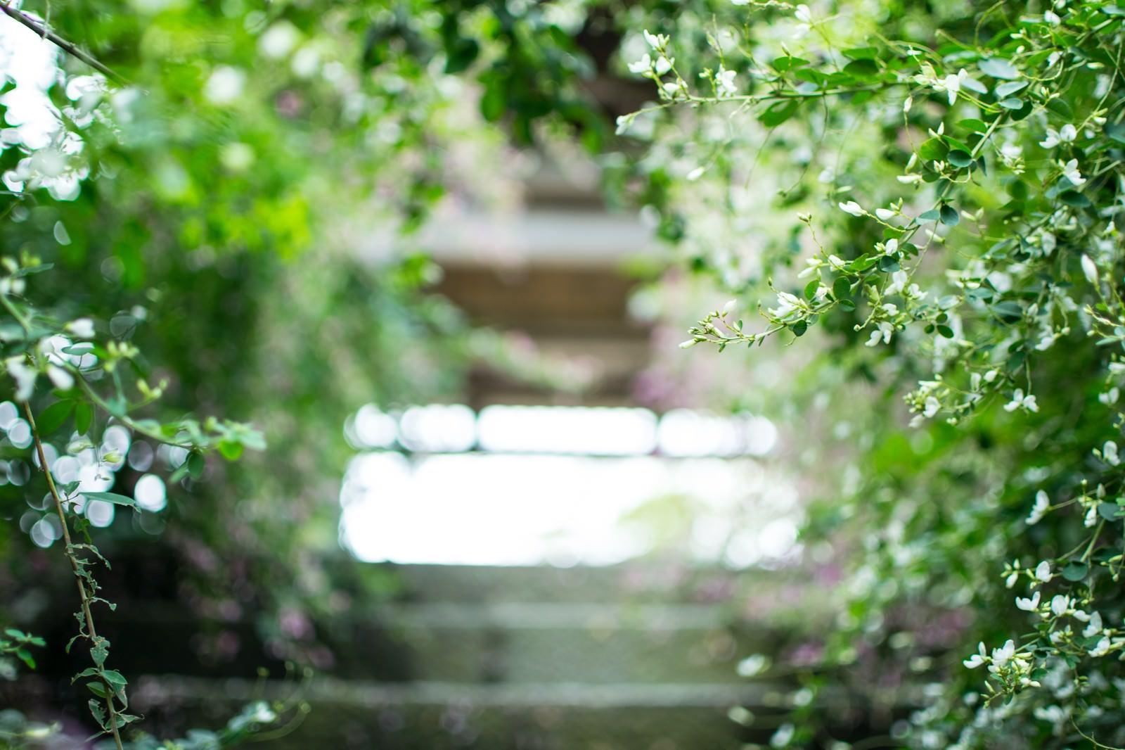 「緑に囲まれた階段」の写真