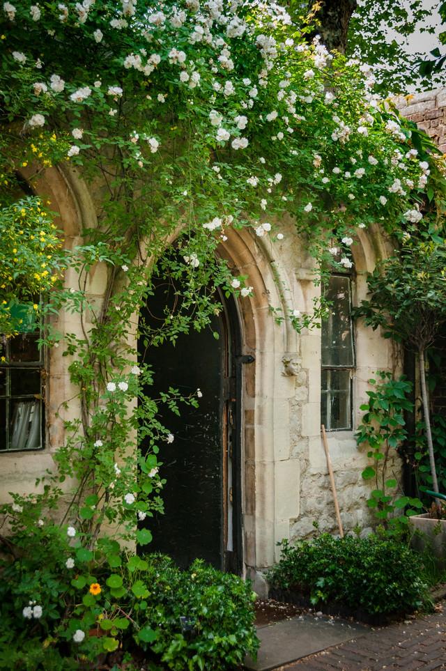 アーチ状に広がる白バラの庭壁の写真