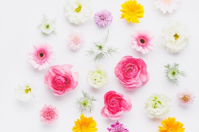 春色テクスチャ(マット)の写真