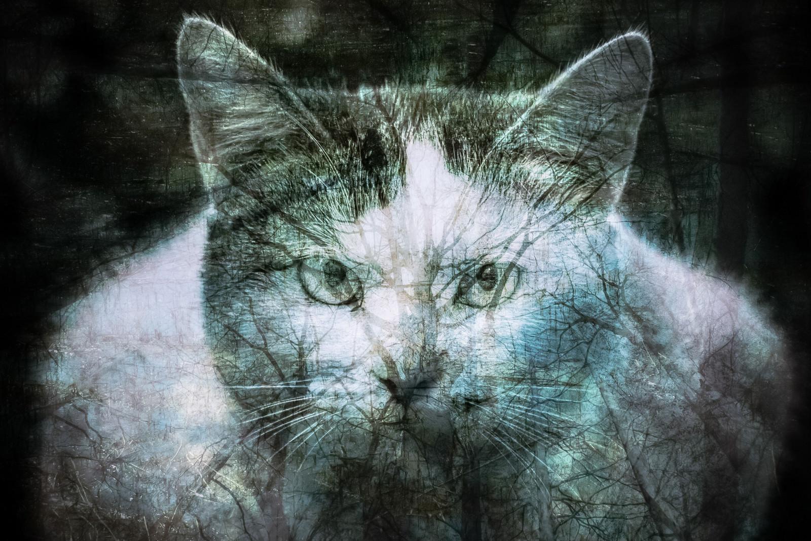 「森の木々と猫(フォトモンタージュ)」の写真