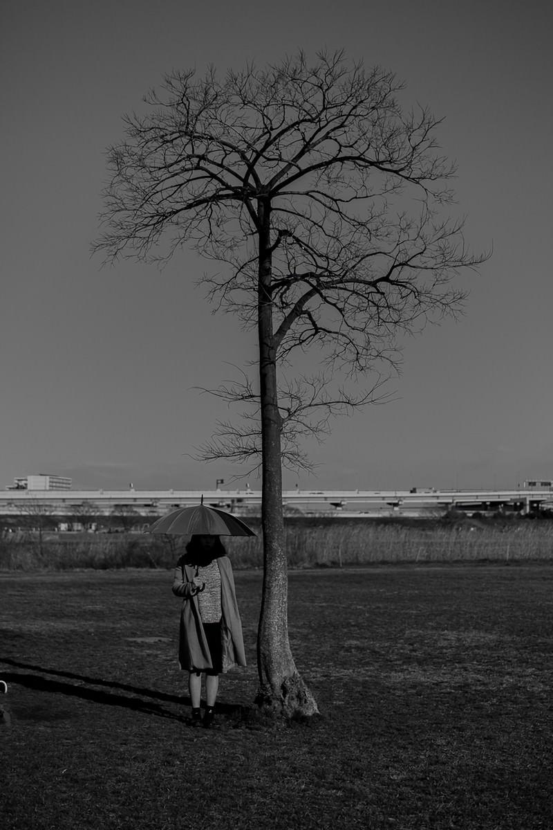 「枯木で雨宿り」の写真