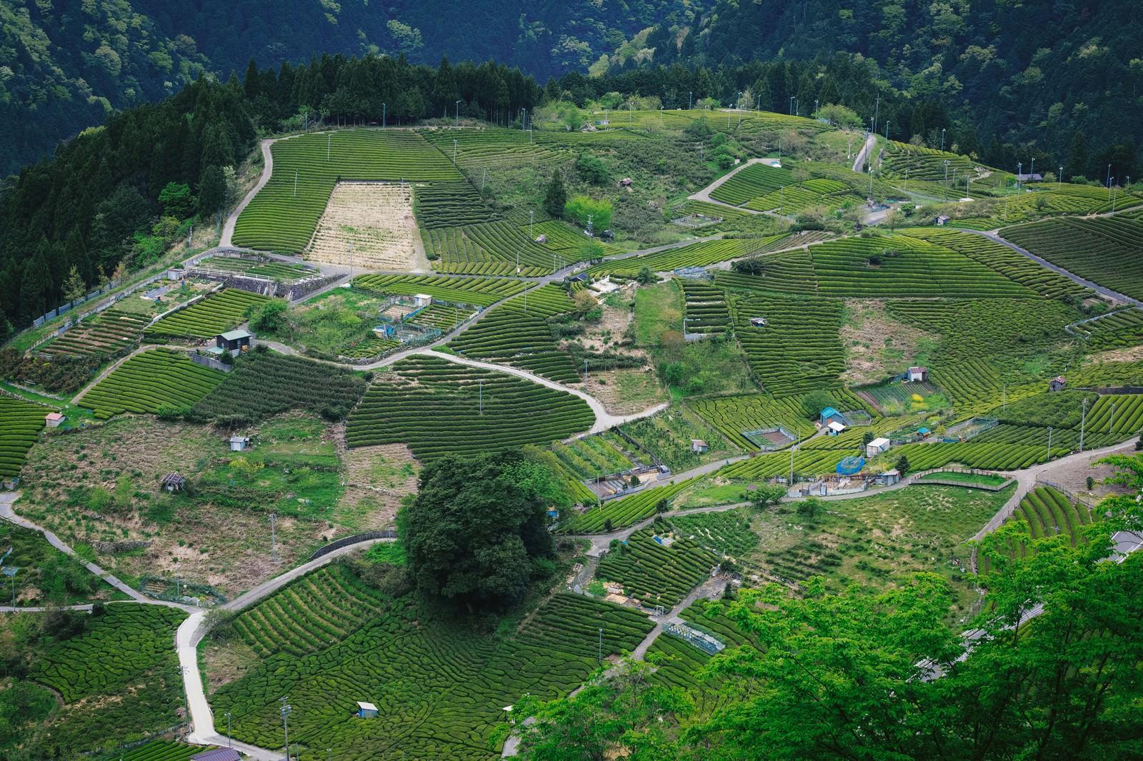農家の年収ランキングTOP10|みかん/1000万
