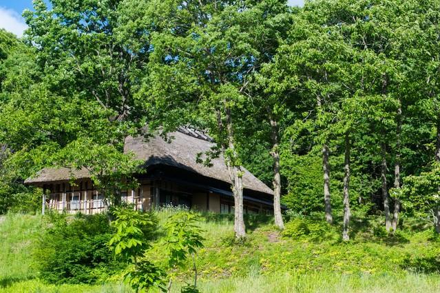 新緑に包まれる茅葺き屋根の古民家の写真