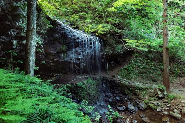 静かに流れ落ちる裏見の滝(岩井滝)と新緑の写真