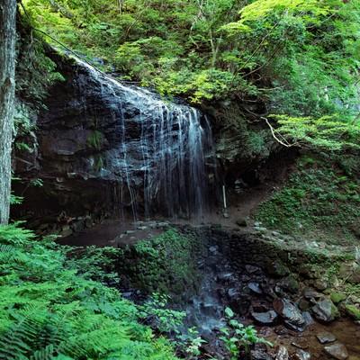 「静かに流れ落ちる裏見の滝(岩井滝)と新緑」の写真素材