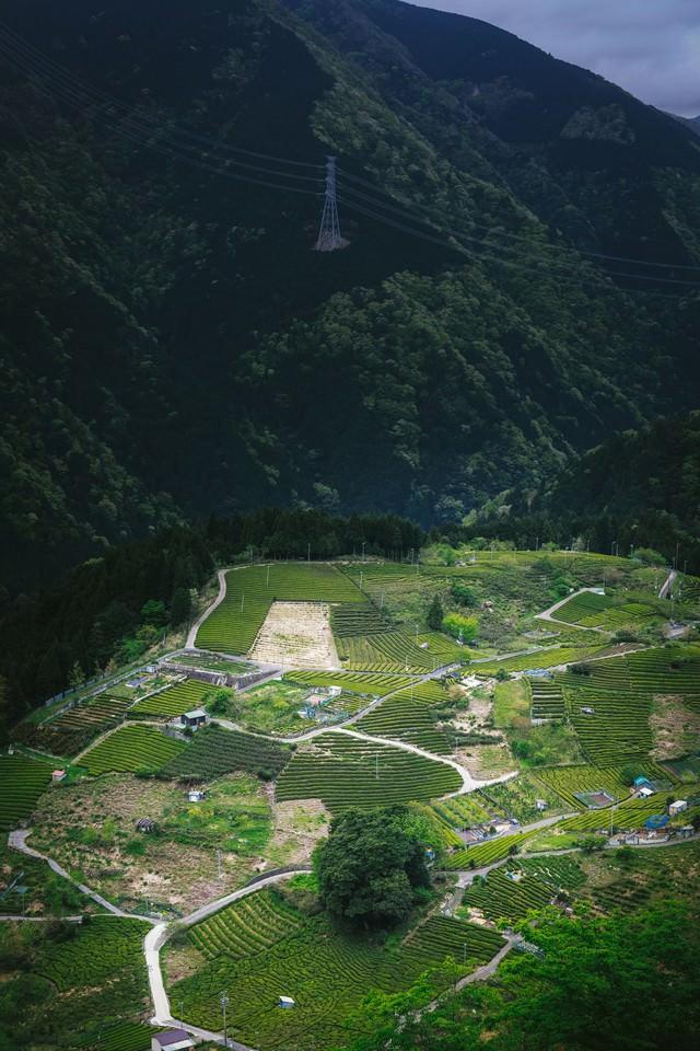 岐阜のマチュピチュ「天空の茶畑」の写真