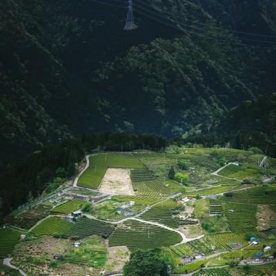 「岐阜のマチュピチュ「天空の茶畑」」の写真素材