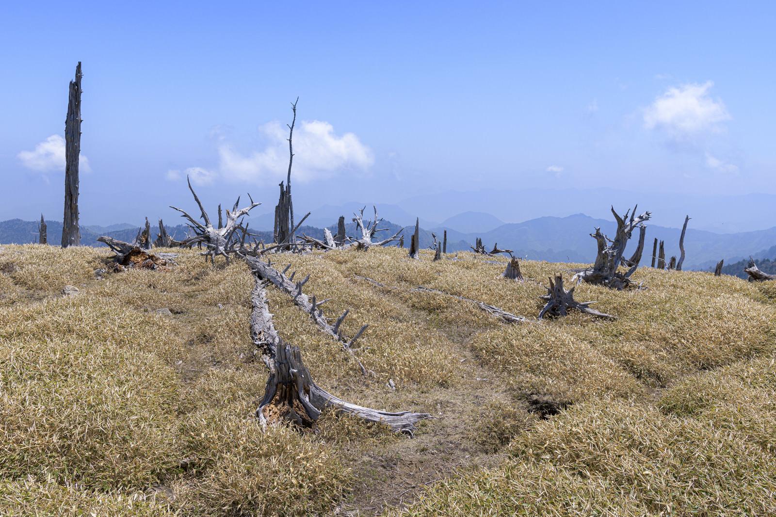 「伊勢湾台風で枯れた木々の跡(大台ヶ原)」の写真