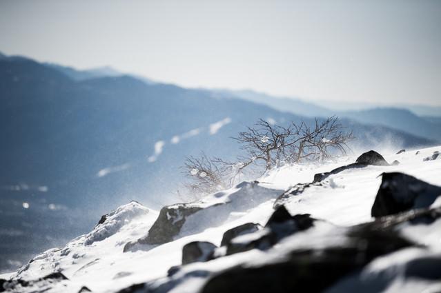 厳冬期の蓼科山頂で風雪を耐え忍ぶ木々の写真