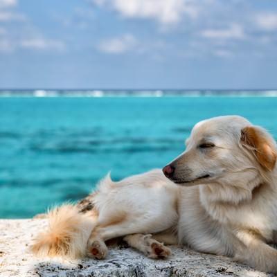 潮風を浴びて眠るウトウトするイッヌの写真