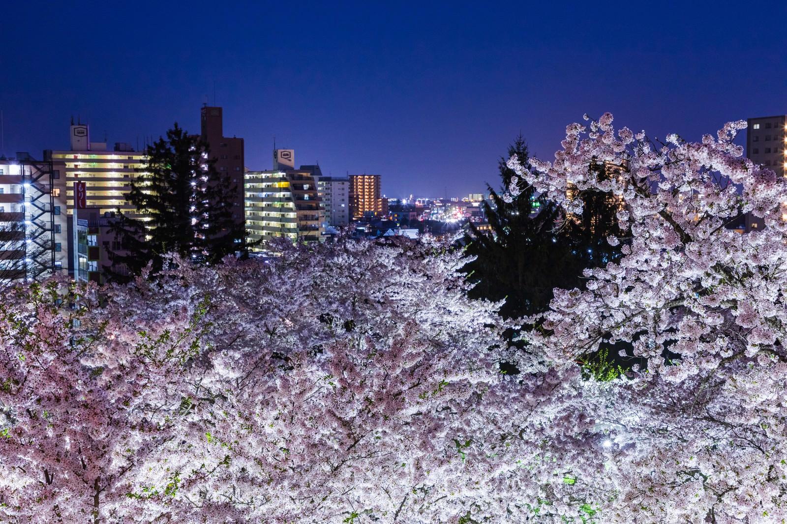 「盛岡城跡の夜桜と市街 | 写真の無料素材・フリー素材 - ぱくたそ」の写真