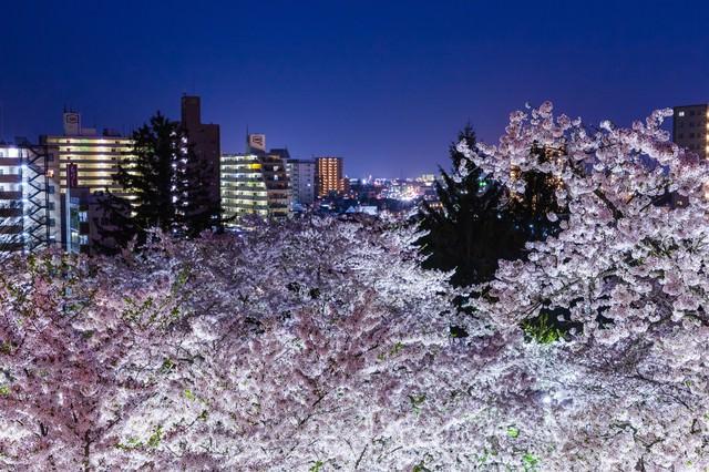盛岡城跡の夜桜と市街の写真