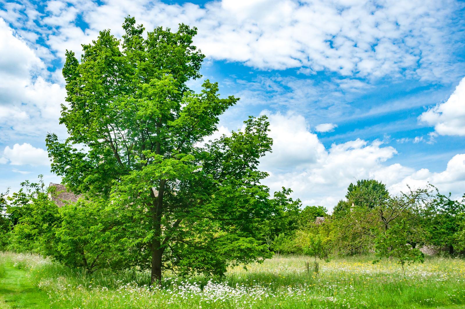 「青空と生気溢れる大きな木」