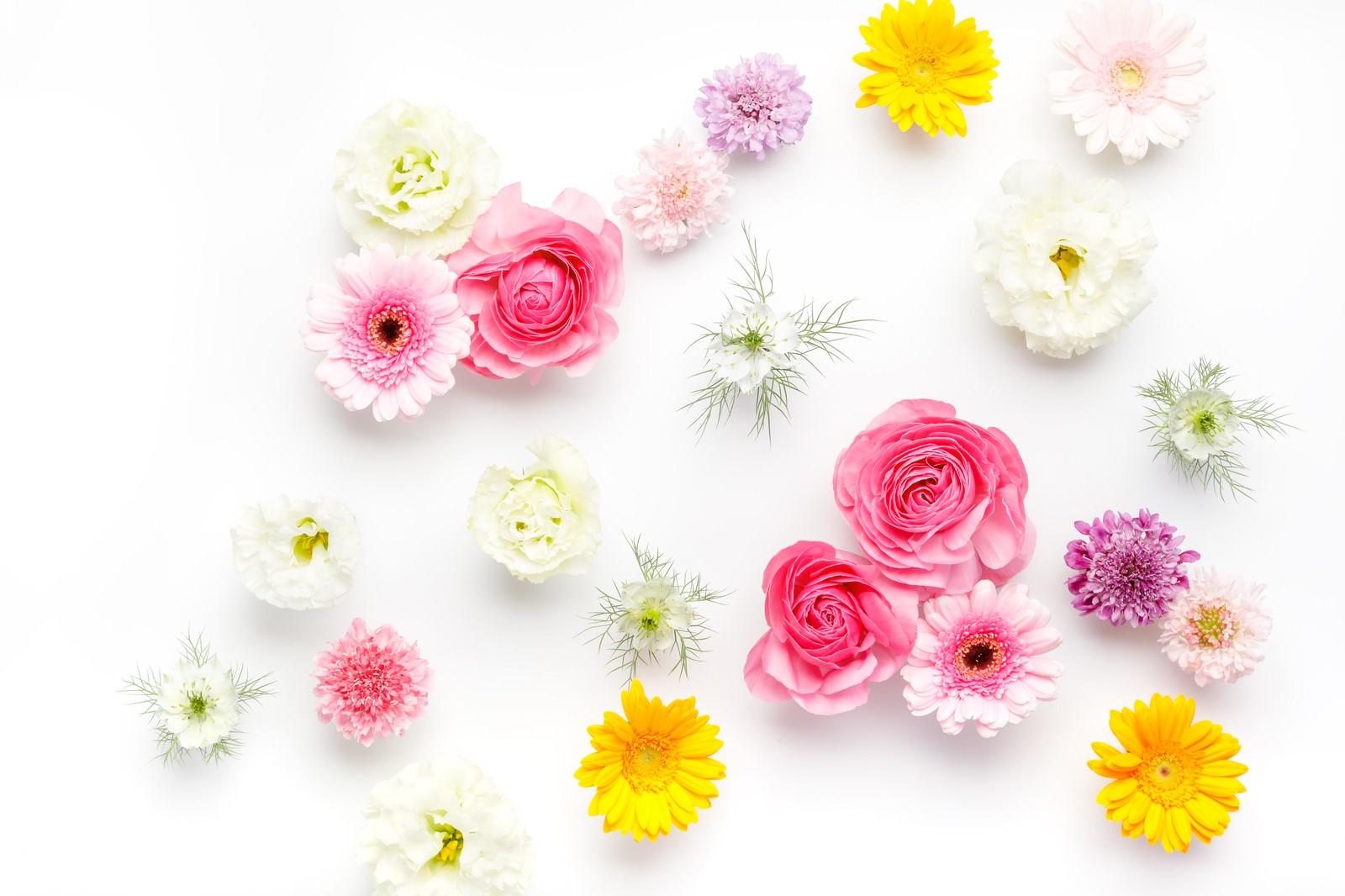 花いっぱい|ぱくたそフリー素材