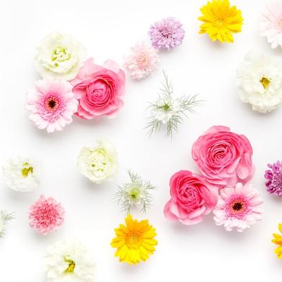 「花いっぱい」の写真素材